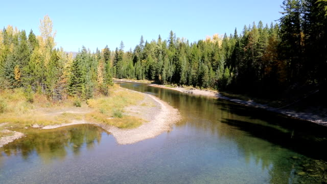 beautiful mountain river moving through pine forest - glacier national park us stock videos and b-roll footage