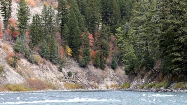 beautiful mountain river - snake river stock videos and b-roll footage