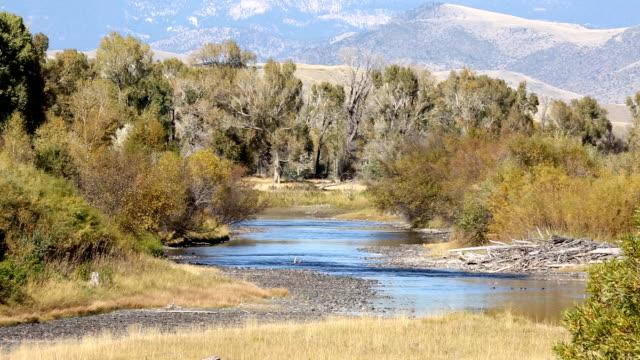 stockvideo's en b-roll-footage met prachtige berg rivier - montana westelijke verenigde staten