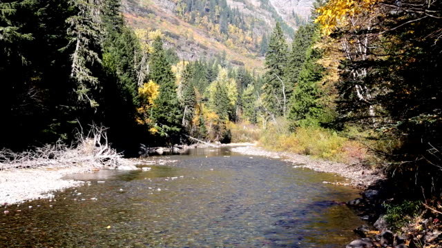 beautiful mountain river with fall colors - glacier national park us stock videos and b-roll footage