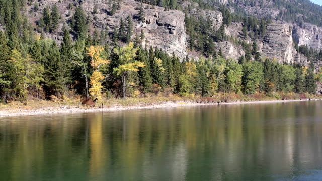 beautiful mountain river with forest reflection - glacier national park us stock videos and b-roll footage