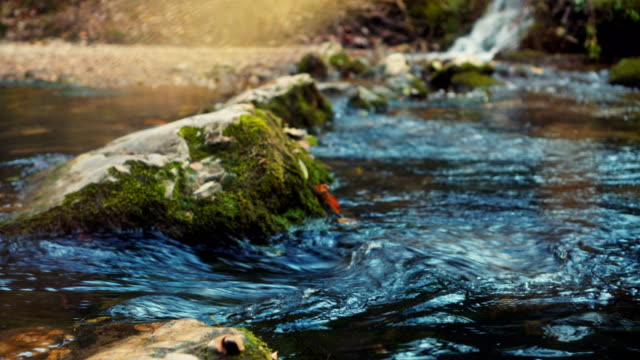 beautiful mountain stream - stream flowing water stock videos and b-roll footage