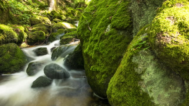 Beautiful Mountain Stream With Moss On Rocks