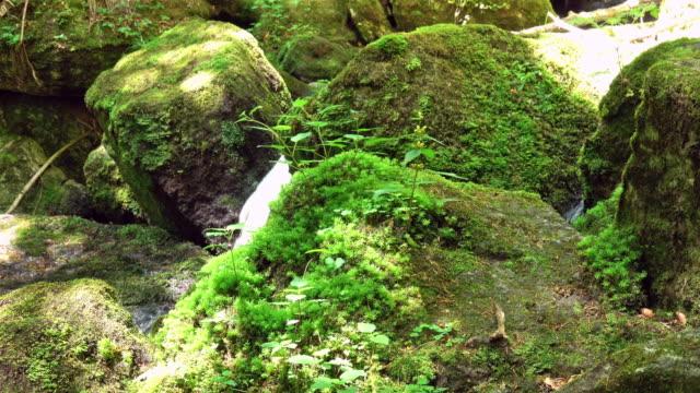 Schönen Bergbach mit Moos auf den Felsen