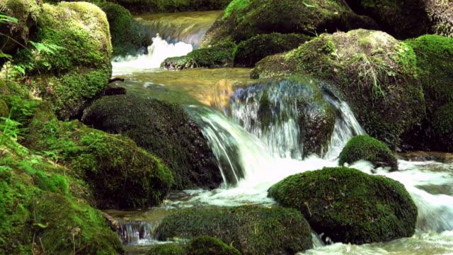 Magnifique ruisseau de montagne avec de la mousse sur les rochers