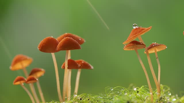 beautiful mushrooms in the nature - animals in the wild stock videos & royalty-free footage