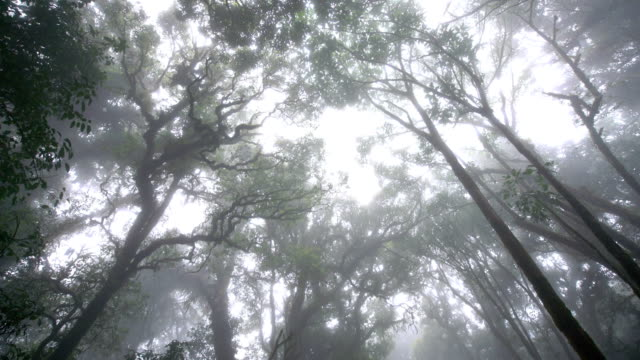 Beautiful mystery rain forest in the morning, Chiang Mai, Thailand.