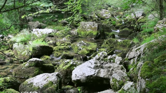 beautiful nature. a forest where a river runs between rocks surrounded by vegetation - parque natural stock videos and b-roll footage