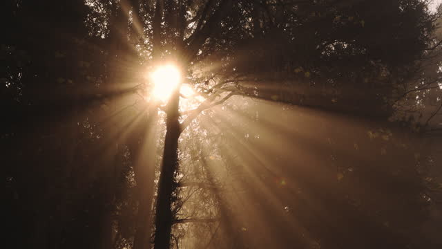 beautiful nature forest scenery in woodlands at sunrise, sunbeams shining through bare trees in misty foggy weather, magical atmospheric mist and fog in the woods, england, uk - bare tree stock videos & royalty-free footage
