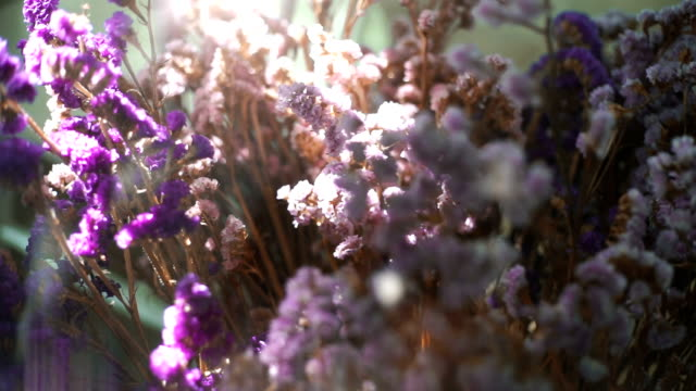 beautiful nature scene field against sunlight with purple flowers - bouquet stock videos and b-roll footage