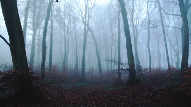 beautiful nature shot of amazing landscape scenery of trees in a woods, woodlands in foggy misty blue weather conditions, thick fog and mist mysterious atmospheric haunted spooky halloween scene, england, uk - bare tree stock videos & royalty-free footage