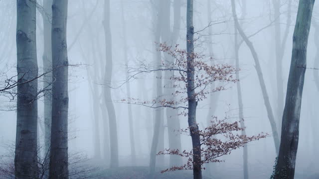 beautiful nature shot of amazing landscape scenery of trees in a woods, woodlands in foggy misty blue weather conditions, thick fog and mist mysterious atmospheric spooky scene, england, uk - bare tree stock videos & royalty-free footage
