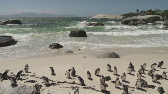 Beautiful Ocean Waves Crashing On Penguin Colony Beach Stock Footage