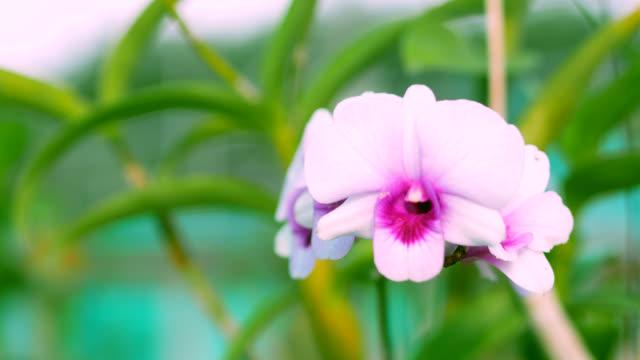 schöne orchideenblume blüht im garten. - weichzeichner stock-videos und b-roll-filmmaterial