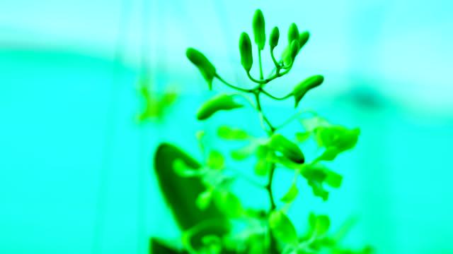 vídeos de stock e filmes b-roll de beautiful orchid flower blooming in the garden. - focagem difusa