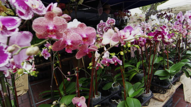 stockvideo's en b-roll-footage met beautiful orchids at a san francisco open market - orchidee