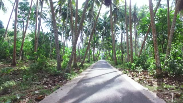 Beautiful palm alley in Cristal bay. Nusa penida