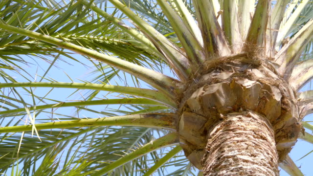 Beautiful palm trees in 4K slow motion