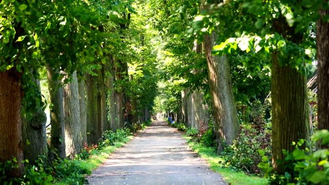 Mooi pad met bomen