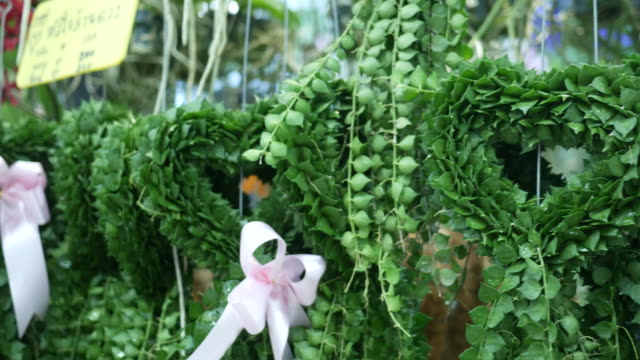 beautiful plant in heart shape - souvenir stock videos and b-roll footage