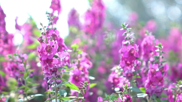 beautiful purple flowers blooming