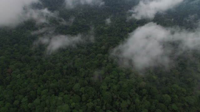 Beautiful rainforest reserve from above