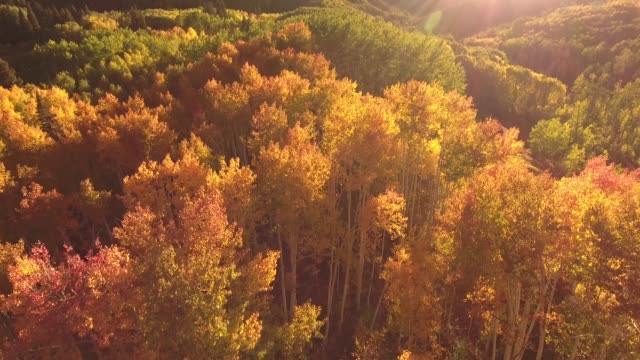 beautiful reflection reveal up aspen trees aerial, drone, 4k, rocky mountains, amazing, autumn, colorful, colors, fall, forest, leaves, red, trees, aspen, yellow, colorado, kebler pass, mountain, grove, raw.mov - colorado stock videos & royalty-free footage