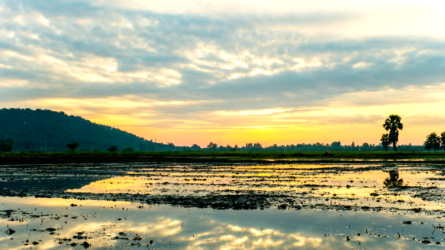 beautiful rice field with cloudy sky and reflection on water - high dynamic range imaging stock videos and b-roll footage