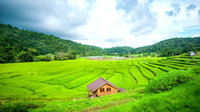 Beautiful Rice Terrace among Mountain with Moving Cloud.