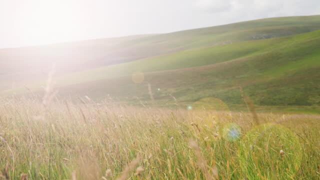 中国・新江の美しい波紋の草原 - 草地点の映像素材/bロール