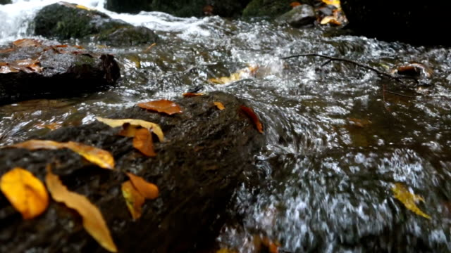 beautiful river in autumn with leafs on the tree