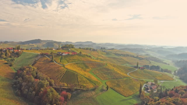 aerial beautiful rolling vineyard landscape - farmhouse stock videos & royalty-free footage