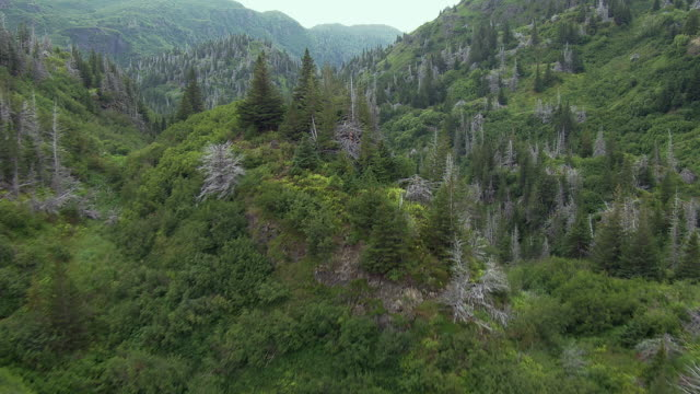 beautiful scenic forest in alaska - homer alaska stock videos & royalty-free footage