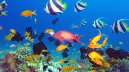 Beautiful Sea Colorful Garden