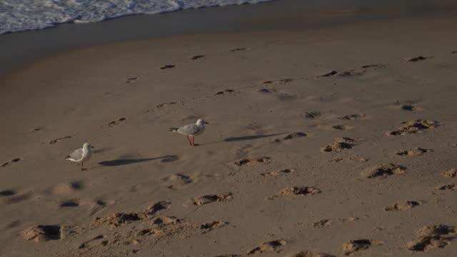 beautiful seagulls at the beach - costa dell'oregon video stock e b–roll