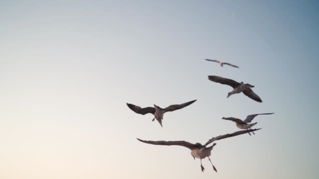 beautiful seagulls flying in the sky - formation flying stock videos & royalty-free footage