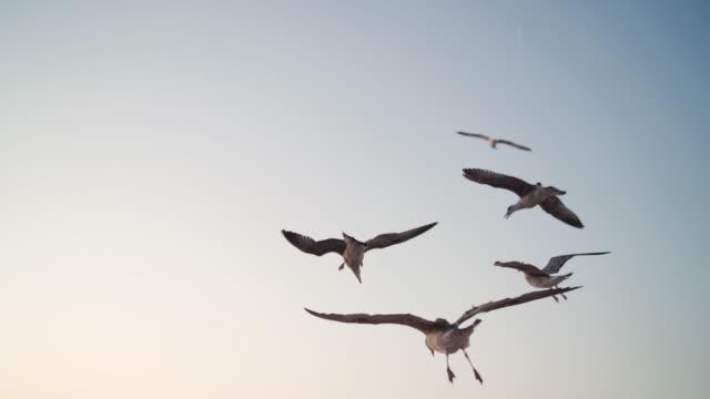 空を飛ぶ美しいカモメ - seagull点の映像素材/bロール