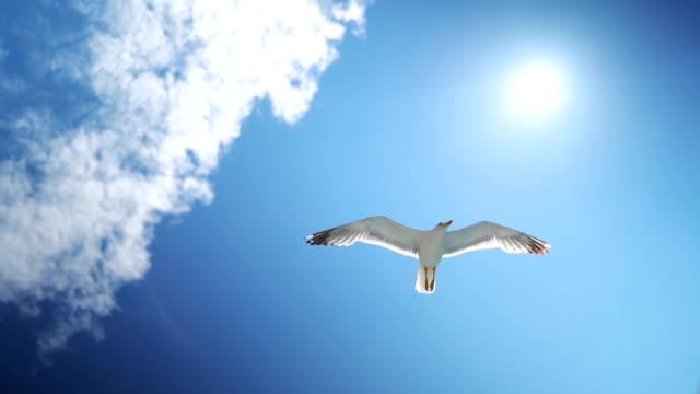 美しい空に飛ぶとかもめ - 動物の翼点の映像素材/bロール