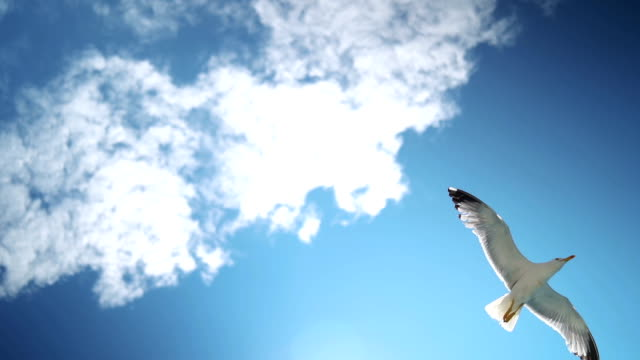 beautiful seagulls flying in the sky - seagull stock videos & royalty-free footage