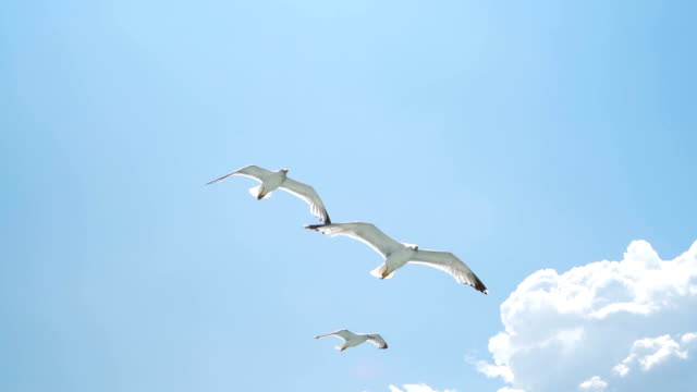 beautiful seagulls flying in the sky - seagull stock videos and b-roll footage