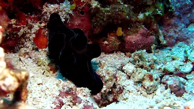 vackra skal - andamansjön bildbanksvideor och videomaterial från bakom kulisserna