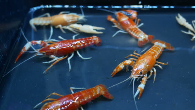 beautiful shrimp in farm - household fixture stock videos and b-roll footage
