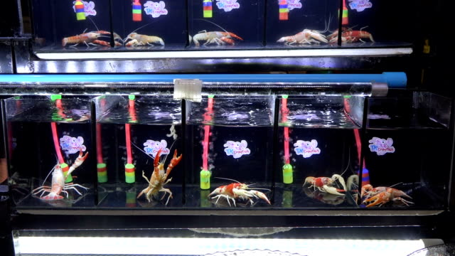 beautiful shrimp - storage tank stock videos & royalty-free footage