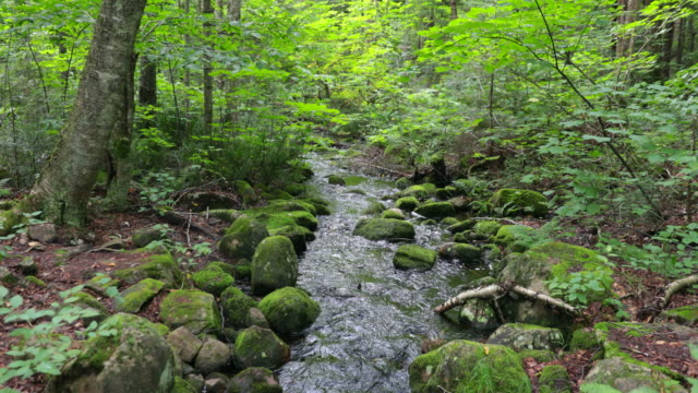 Beautiful Small Creek Nature Landscape, Quebec, Canada