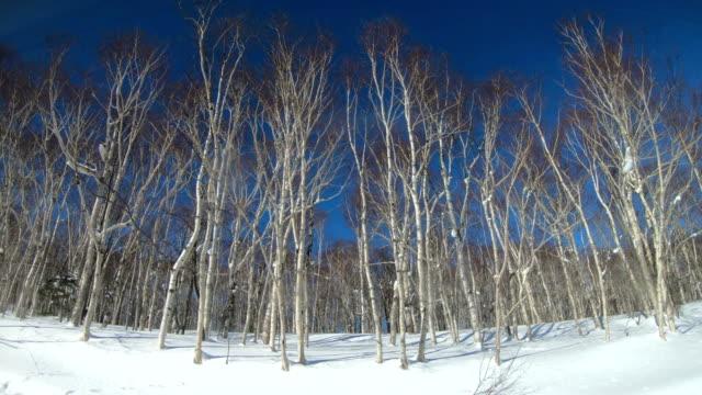 beautiful snow landscape view from bus to teine ski resort, sapporo, japan - ski stock videos & royalty-free footage