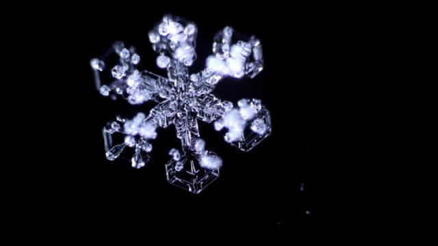 vídeos de stock, filmes e b-roll de ramos de floco de neve bonito é desaparecer pelo tempo - cristais