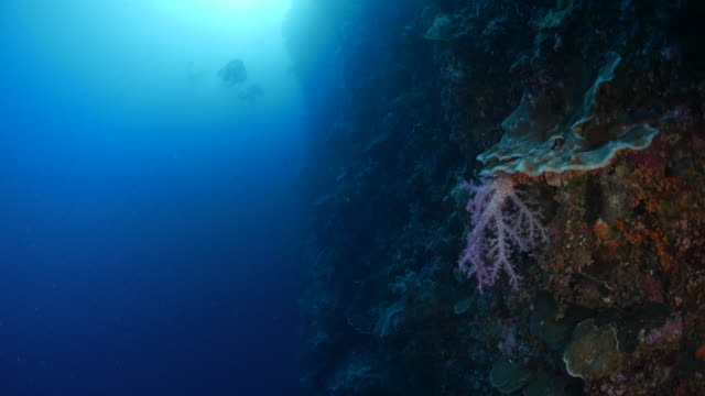 Beautiful soft coral in deep sea reef