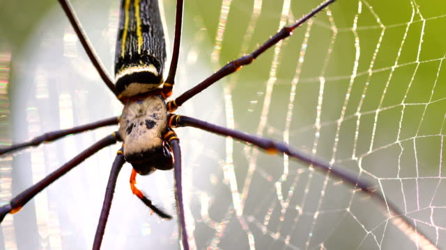 beautiful spider and web in the nature, 4k. - spider stock videos & royalty-free footage