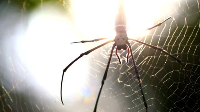 schöne spinne und web in der natur, 4k. - nest stock-videos und b-roll-filmmaterial