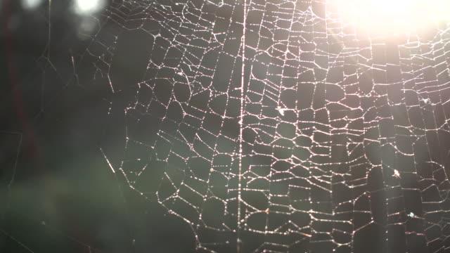 vidéos et rushes de belle toile d'araignée au coucher du soleil - attraper